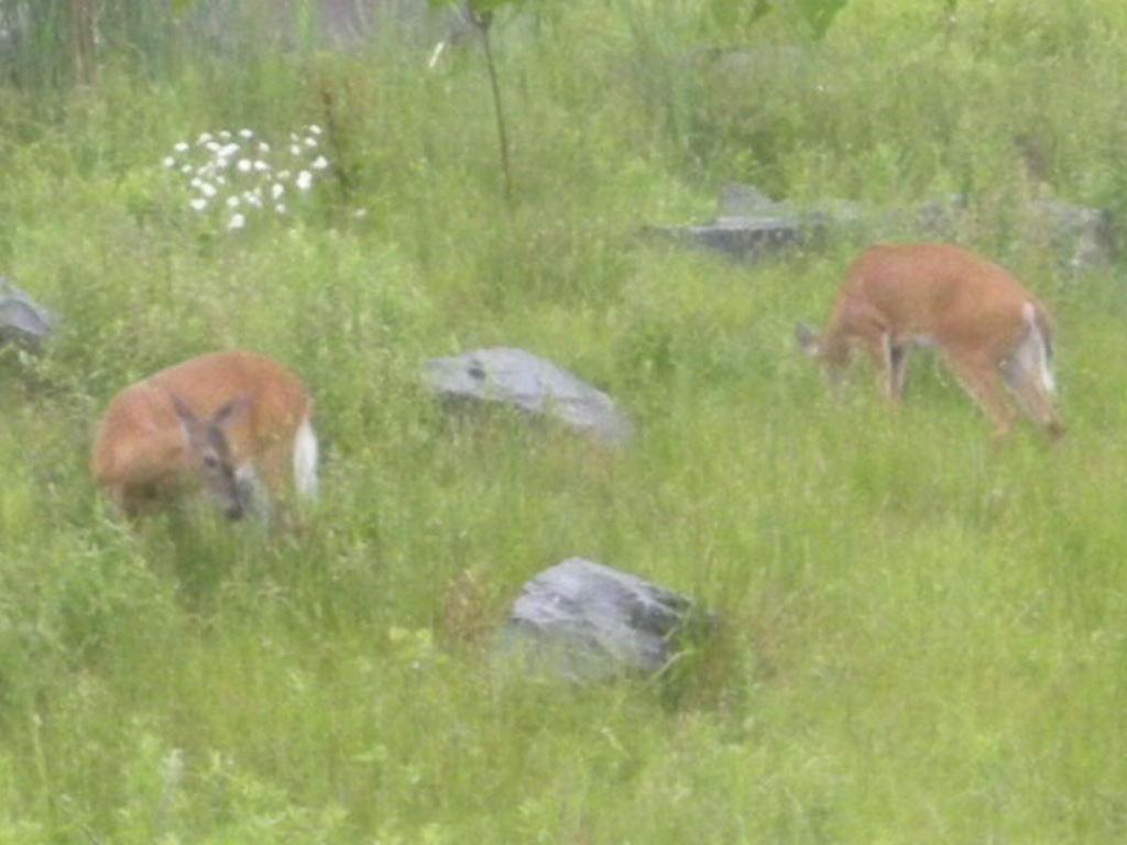 2_Deer.jpg